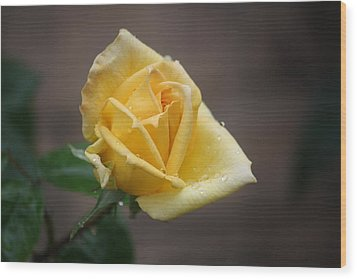 Yellow Rose Of Texas Wood Print