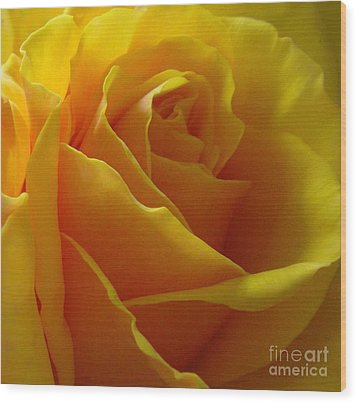 Yellow Rose Of Texas Wood Print by Sandra Phryce-Jones