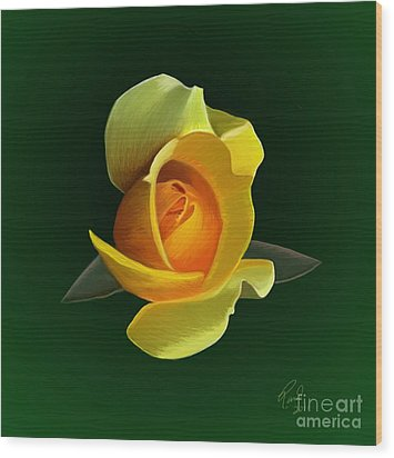 Yellow Rose Wood Print by Rand Herron