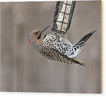 Wood Print featuring the photograph Yellow-shafted Northern Flicker Feeding by Edward Peterson