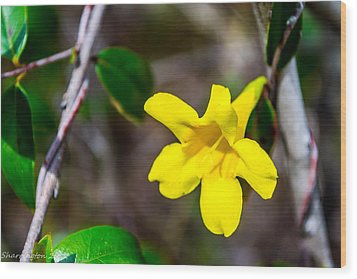 Wood Print featuring the photograph Yellow by Shannon Harrington