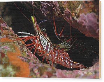 Yellow Snout Red Shrimp Wood Print by Sami Sarkis