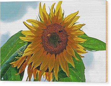 Yellow Sunflower Wood Print by Susan Leggett
