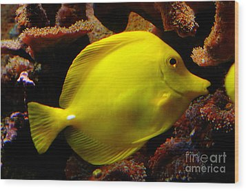 Yellow Tang Wood Print by Pravine Chester