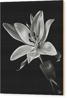 Wood Print featuring the photograph Yellow Tiger Lily In Black And White by Endre Balogh