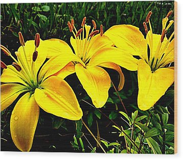 Yellow Triad Of Lilies Wood Print by Kevin D Davis