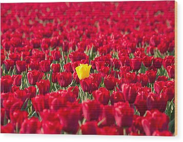 Wood Print featuring the photograph Yellow Tulip by Hans Engbers