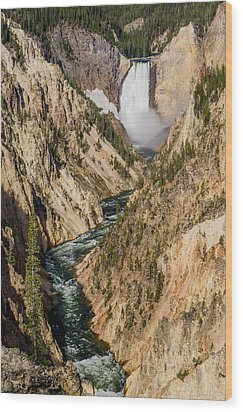 Yellowstone Falls From Artists Point Wood Print by Greg Nyquist
