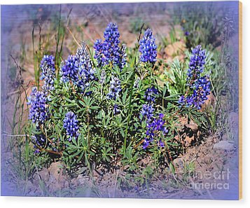 Yellowstone Lupine Blue Wood Print by Carol Groenen