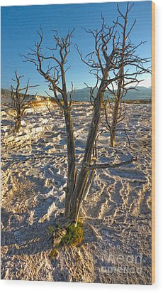 Yellowstone National Park - Minerva Terrace - Dead Tree Wood Print by Gregory Dyer