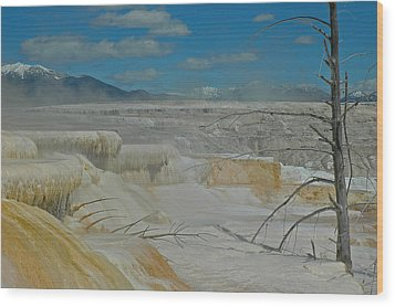 Yellowstone's Canary Springs Wood Print by Bruce Gourley