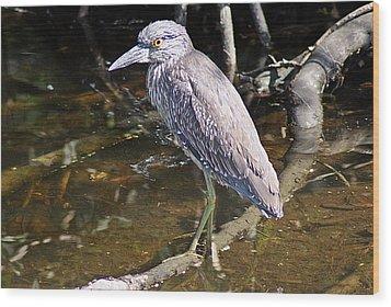 Yelow-crowned Night Heron 1 Wood Print by Joe Faherty