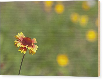 Wood Print featuring the photograph Yep...a Flower by John Crothers