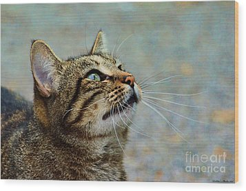 Yes I Am A Pretty Kitty Wood Print by Debbie Portwood