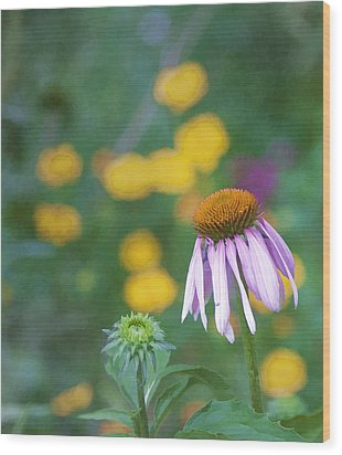 Wood Print featuring the photograph Yet Another Flower by John Crothers
