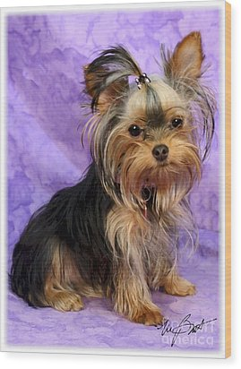 Yorkshire Terrier Pup Wood Print by Maxine Bochnia