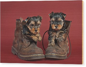 Yorkshire Terrier Puppies  Wood Print by Marta Holka