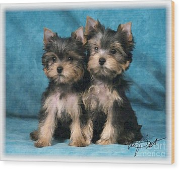 Yorkshire Terrier Pups 2 Wood Print by Maxine Bochnia