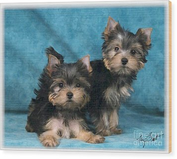 Yorkshire Terrier Pups 3 Wood Print by Maxine Bochnia