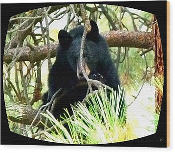 Young Black Bear Wood Print by Will Borden