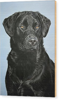 Young Black Labrador Wood Print by Lucy Swinburne
