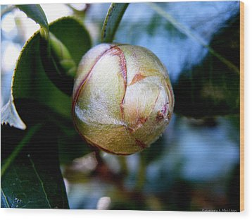 Young Camellia Wood Print