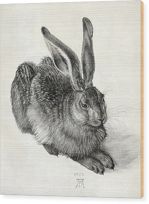 Young Hare, By Durer Wood Print by Sheila Terry
