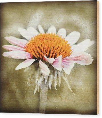 Young Petals Wood Print by Julie Hamilton