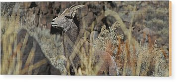 Young Ram Wood Print by Atom Crawford