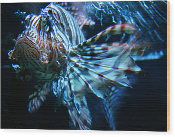 Your Lion Fish Wood Print by Karl Reid
