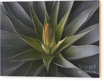 Wood Print featuring the photograph Yucca Bloon by Craig Lovell