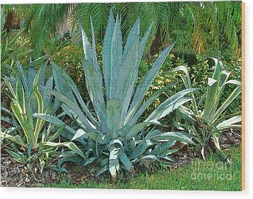 Yucca Plants Wood Print