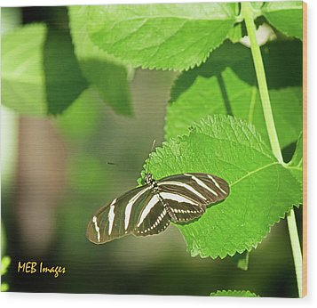 Wood Print featuring the photograph Zebra Butterfly by Margaret Buchanan