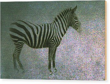 Wood Print featuring the photograph Zebra by Kelly Hazel