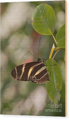 Zebra Longwing Butterfly Wood Print by Dejan Jovanovic