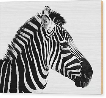 Wood Print featuring the photograph Zebra by Rebecca Margraf
