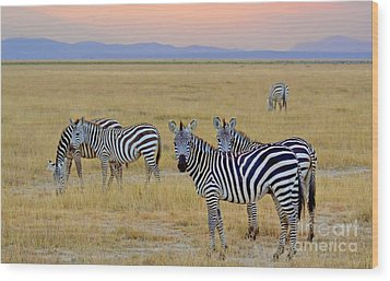 Zebras In The Morning Wood Print by Pravine Chester