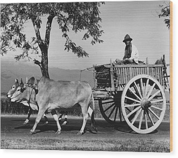 Zebu Cart Wood Print by Richard Harrington