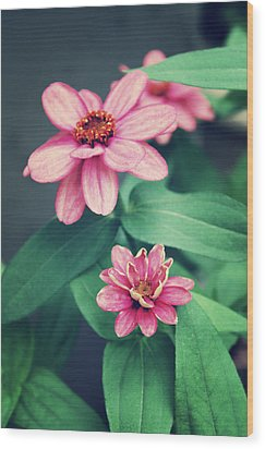 Zinnias Wood Print by Cathie Tyler