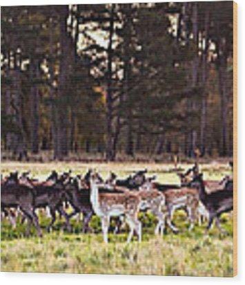 Deer In The Phoenix Park - Dublin Wood Print by Barry O Carroll