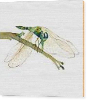 Green Dragonfly Wood Print
