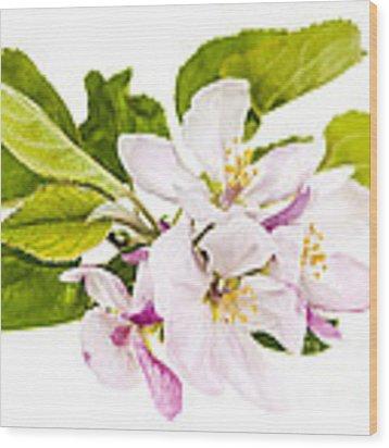 Pink Apple Blossoms Wood Print by Elena Elisseeva