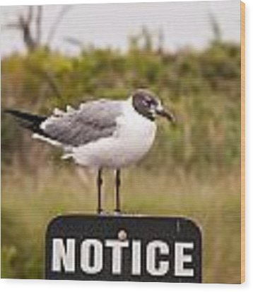 Seagull Standing On A Notice Sign Wood Print by Alex Grichenko