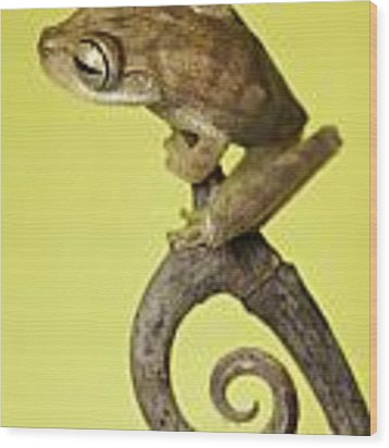 Tree Frog On Twig In Background Copyspace Wood Print