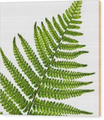 Fern Leaf Wood Print