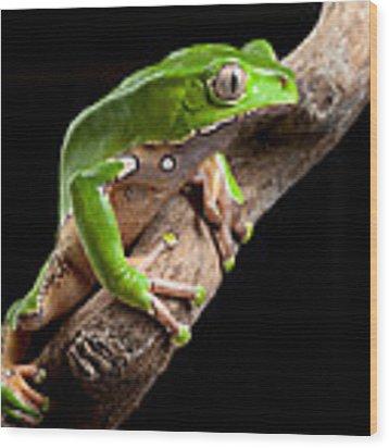 Green Tree Frog Amazon Rain Forest Wood Print