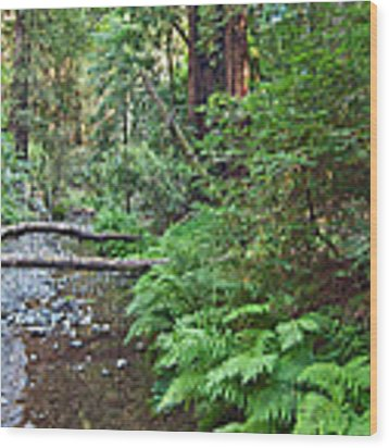 Redwood Forest Of Muir Woods National Monument In San Francisco. Wood Print by Jamie Pham