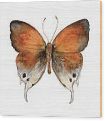 47 Mantoides Gama Butterfly Wood Print by Amy Kirkpatrick