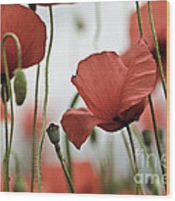 Red Poppy Flowers Wood Print by Nailia Schwarz