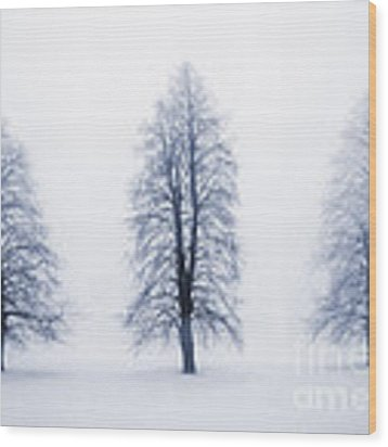 Winter Trees In Fog Wood Print